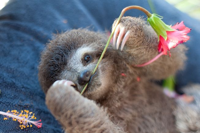 08-slothlove-monster-flower-stem-653x0_q80_crop-smart