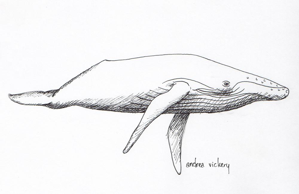 Whale_20170426