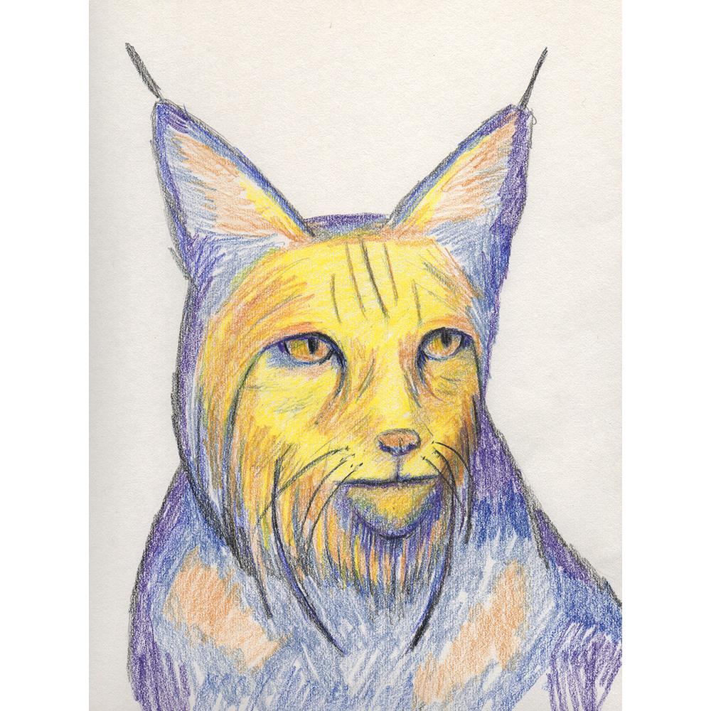 20170523_bobcat