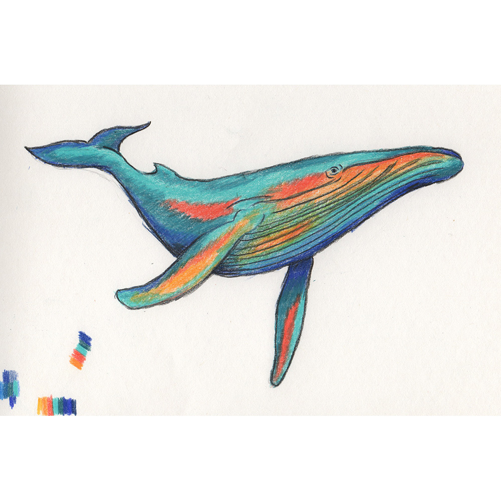20170523_whale