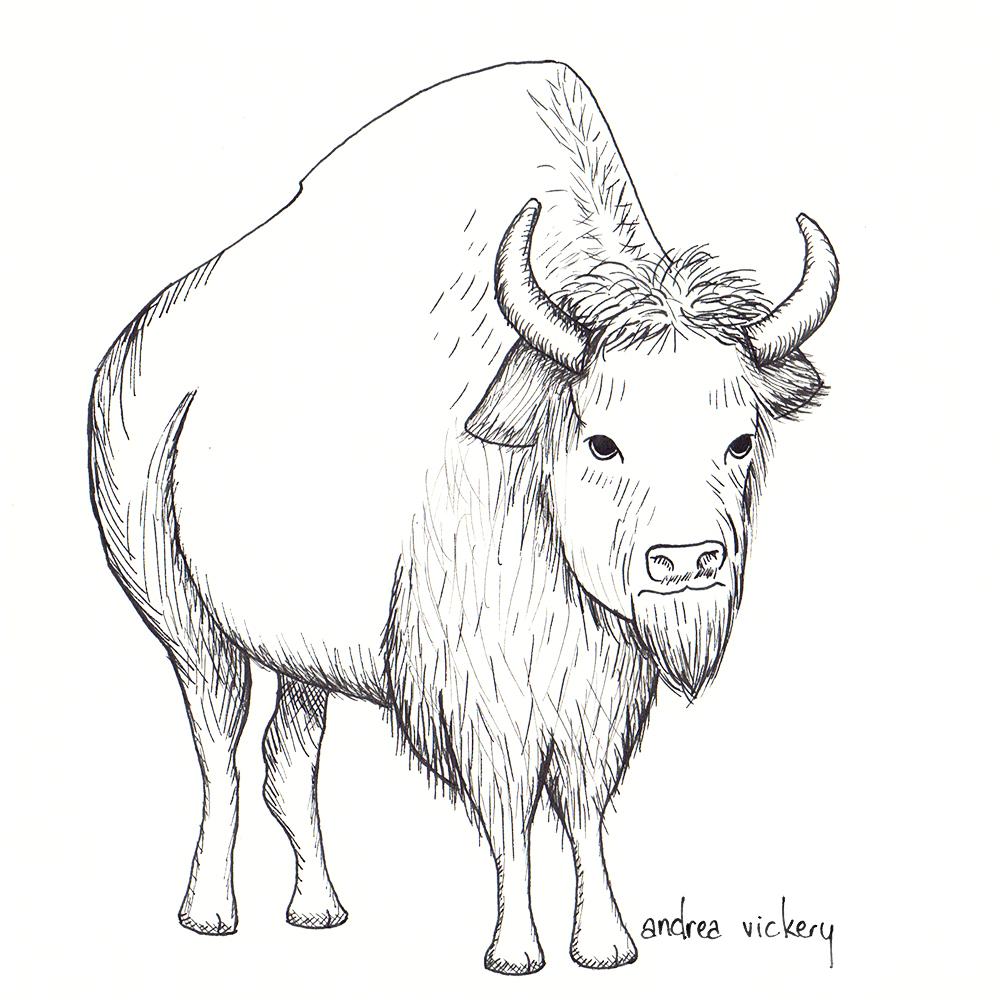 bison20170427