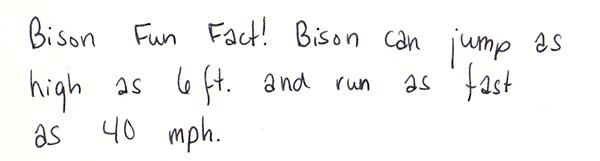 bisonfunfact1