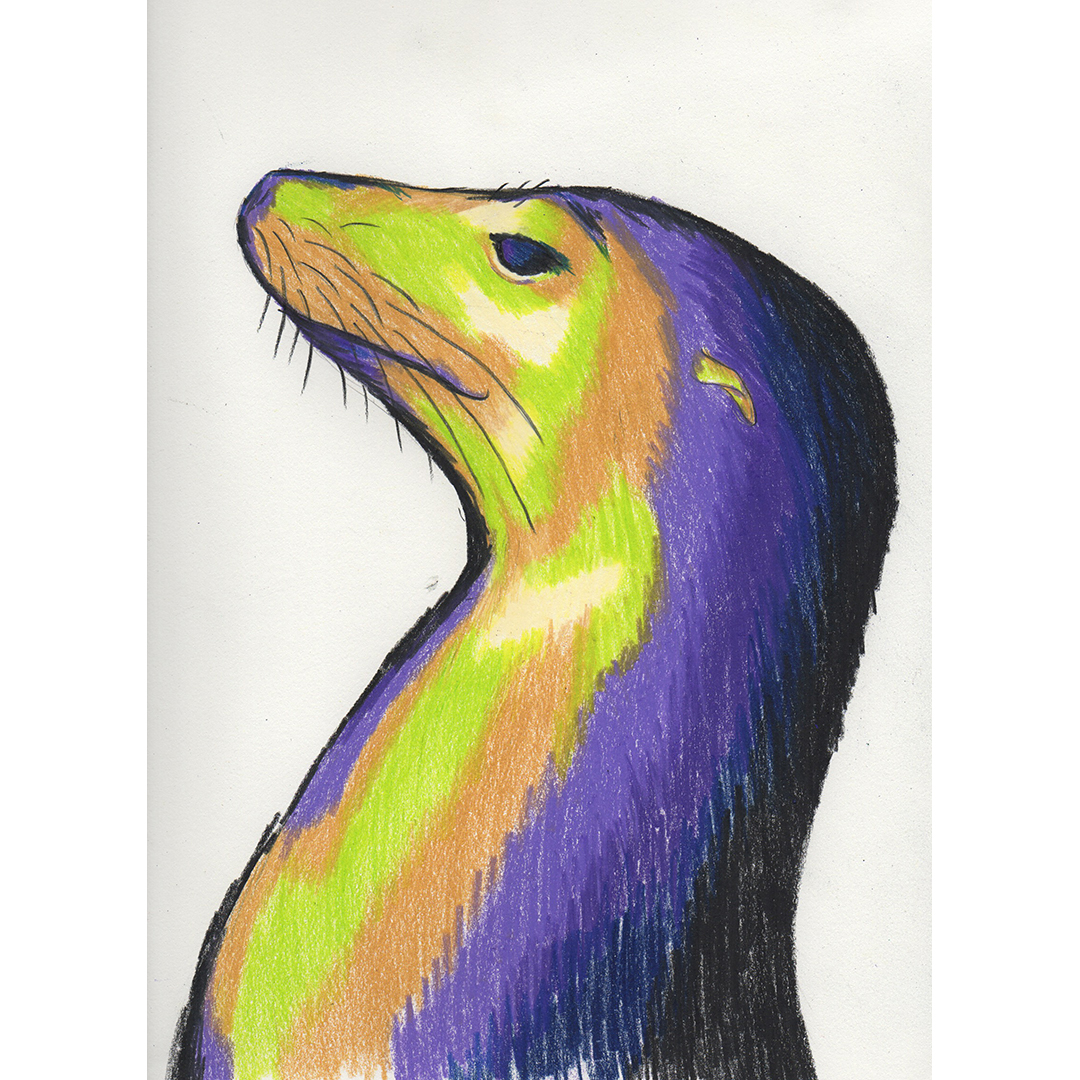 20170629_sealion_colorstudy