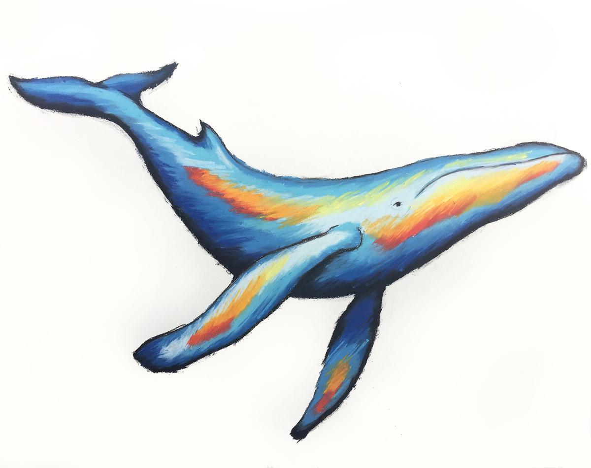 20170809_humpback1